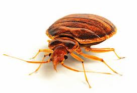 bedbug myths, Raleigh bed bug control