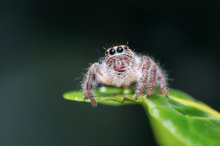 spider-hydraulics