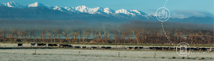 An Essential Guide to Intensive Winter Grazing