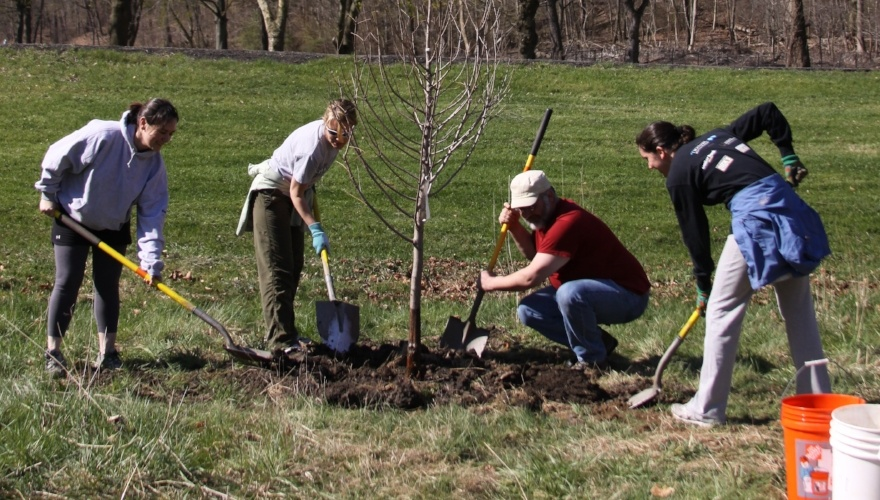 Tree Planting in Highland 1-397550-edited