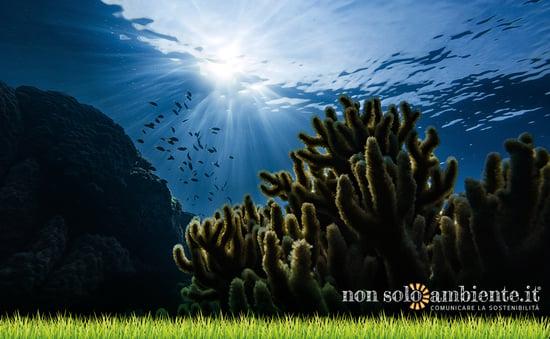 Celebrating World Oceans Day 2021