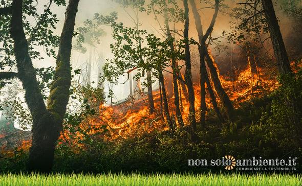 Incendi in Italia e nel mondo, il triste bilancio di un'estate in fiamme