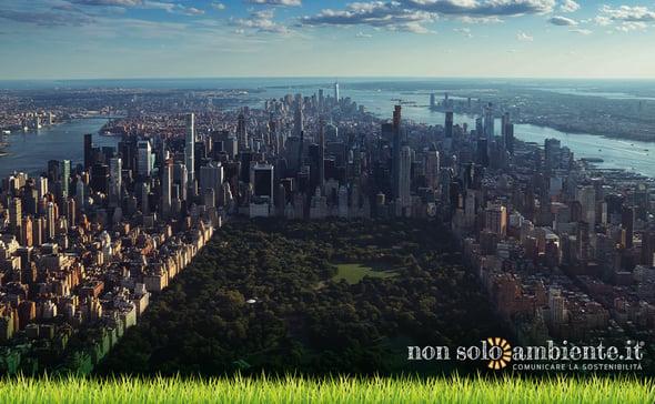 Quanta CO₂ può assorbire una foresta urbana?