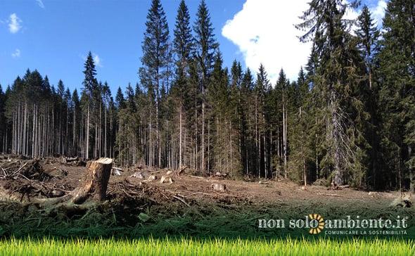 VAIA, cronaca fotografica di un eco-disastro