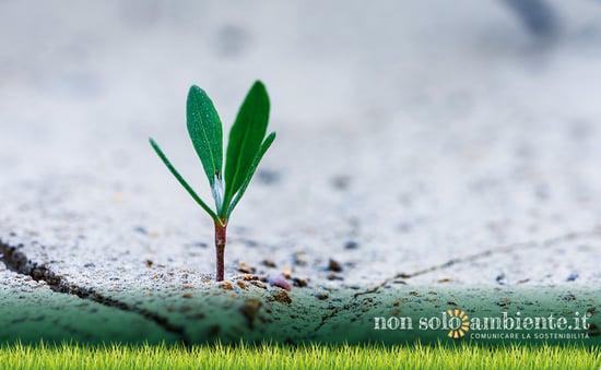 Chi investe in sostenibilità? L'identikit dell'imprenditore sostenibile