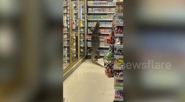 Lizard climbing up a shelf in a shop