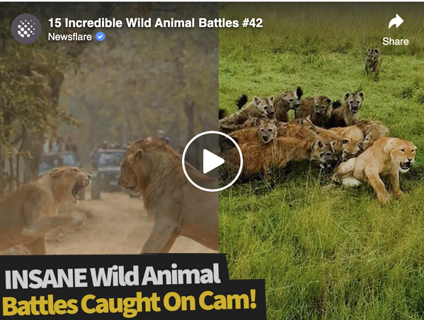 Animals fighting on camera