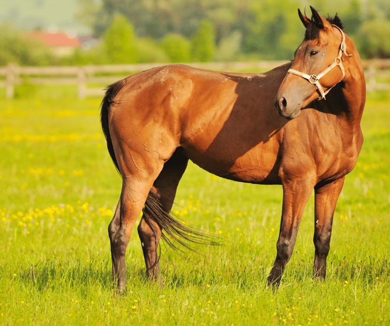 Horseback Riding Schools Near Fulbrook Estates