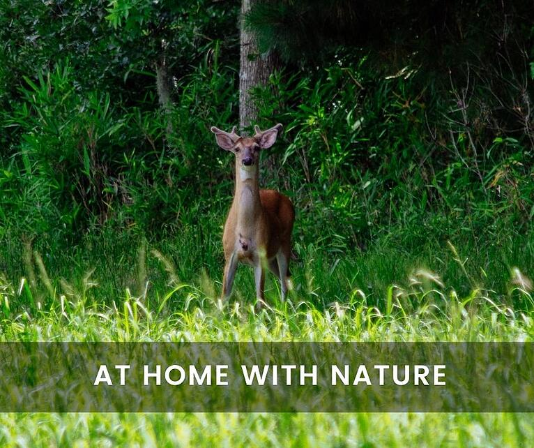What Types of Wildlife Call Fulshear Home?