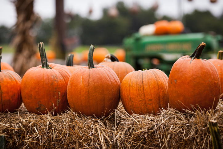 Pumpkin Patches in & Around Fort Bend County