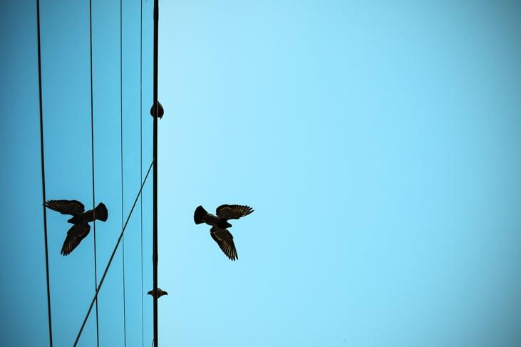 How to Make Modern Glass Architecture Bird-Friendly