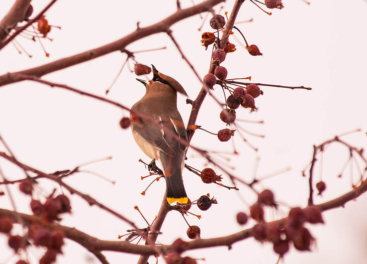 Celebrate Migratory Birds with Citizen Science Initiatives