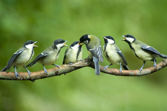 Addressing Climate Change Through Bird Conservation