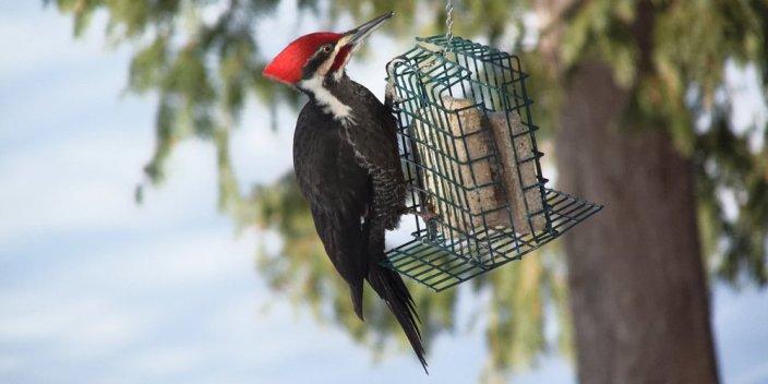 Design Home and Garden Improvements to Benefit Birds