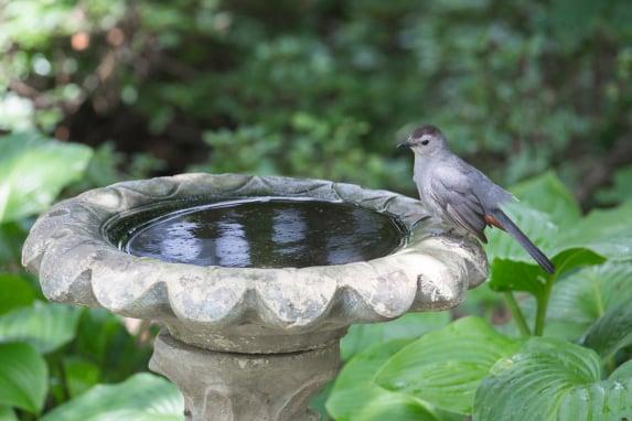 How to Make A Bird Safe Backyard This Spring