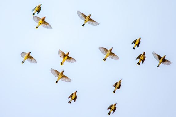 By Design: An Architectural Awakening Could Save Billions of Birds