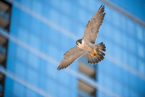 Supporting Bird Conservation Through Innovation