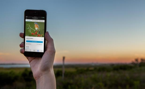 Enjoy the Audubon Bird Guide App While On Your Birding Adventures