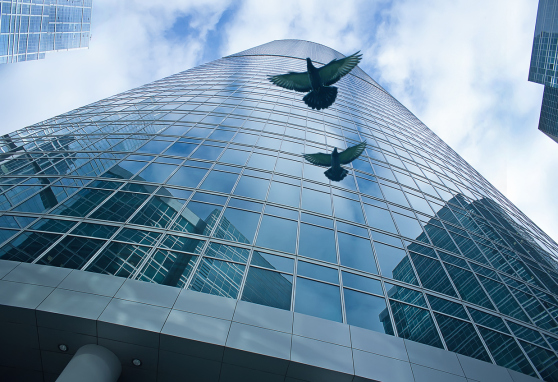 Combatting Window Collisions with Bird-Friendly Solutions