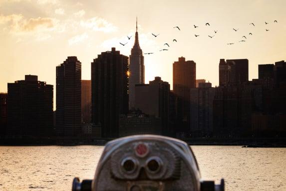 New York City's Bird Legislation Marks Long-Term Conservation Efforts