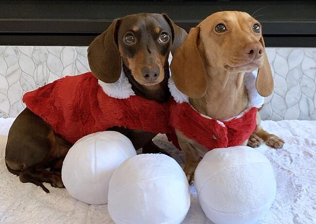How to Make Holiday Pet Coats Using Cuddle® Fabrics