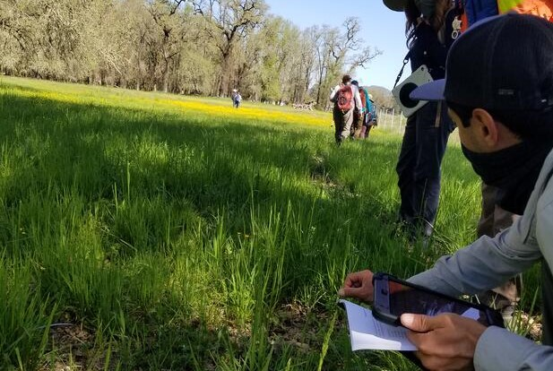 Wetland Delineation 5.0 - Wildnote knows wetlands!