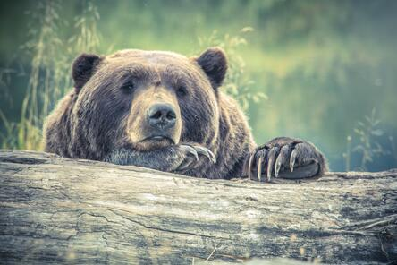FINSUM + Magnifi: This Volatility is the Second Leg of a Bear Market say Analysts