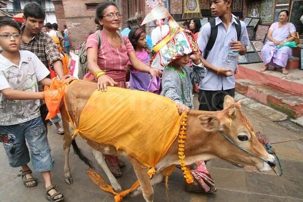 Totenkulte | Nepal – Das Fest der Kühe zu Ehren der Verstorbenen