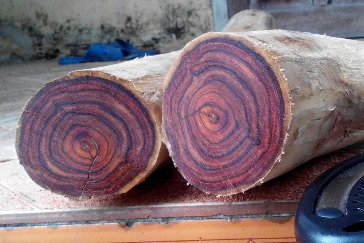 Gỗ Sưa là loại gỗ tự nhiên được nhiều gia đình ưa chuộng