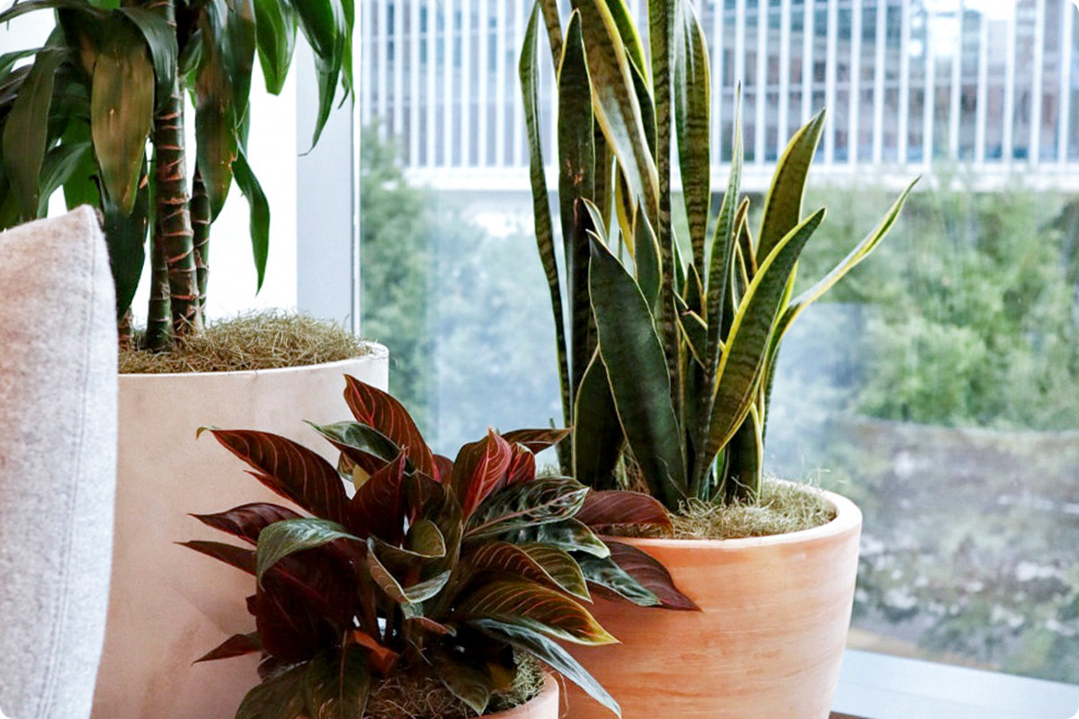 what-are-the-benefits-of-office-plants