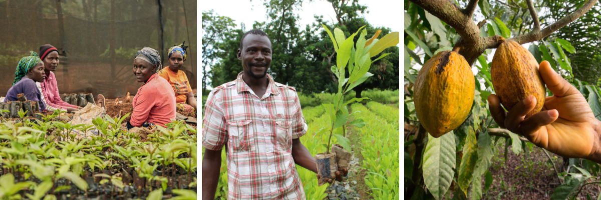 Picture of the Tree farm with women seedling and a man holding a small tree