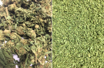 Cannabis Milling Example of Extraction