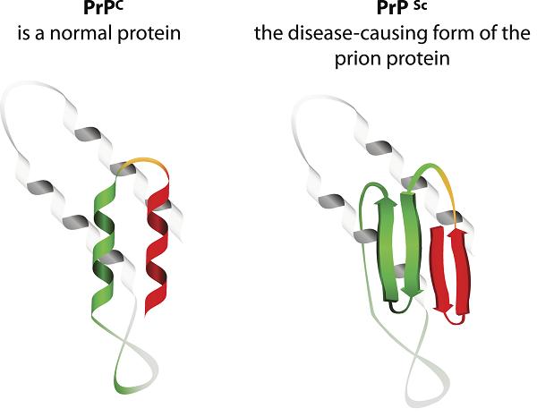 Prion Protein Comparison
