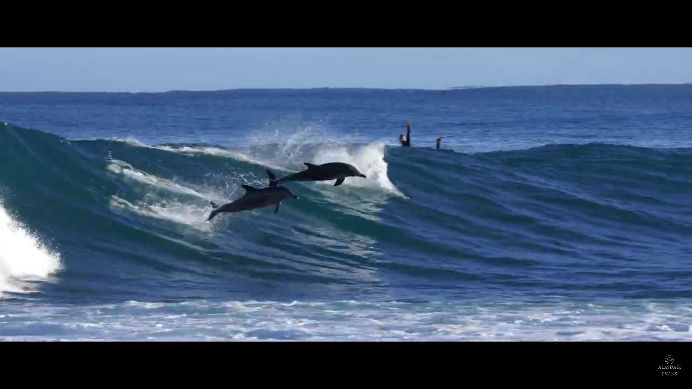 Surfing dolphins in Western Australia.