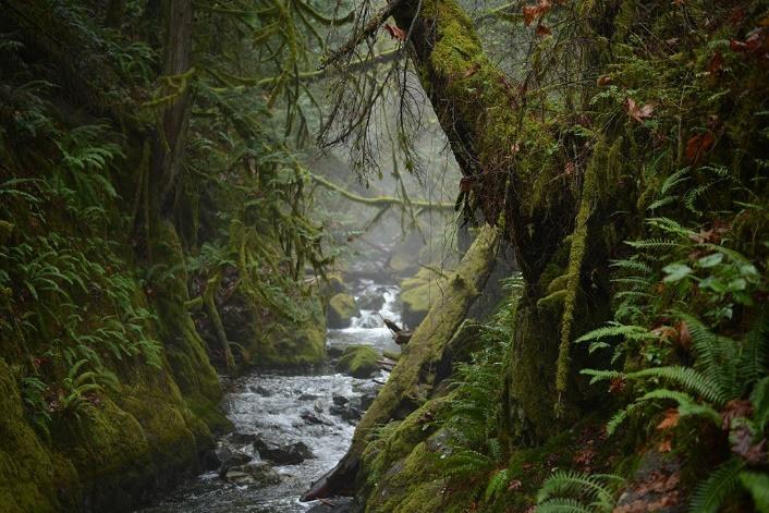 Provinciaal park buiten Victoria British Columbia, Canada